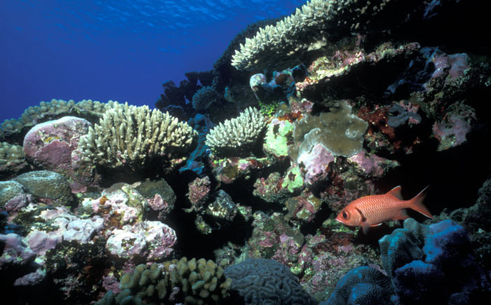 natural underwater reef formation photo
