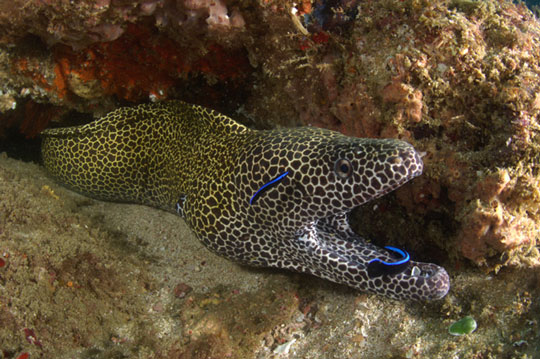 moray eel photo