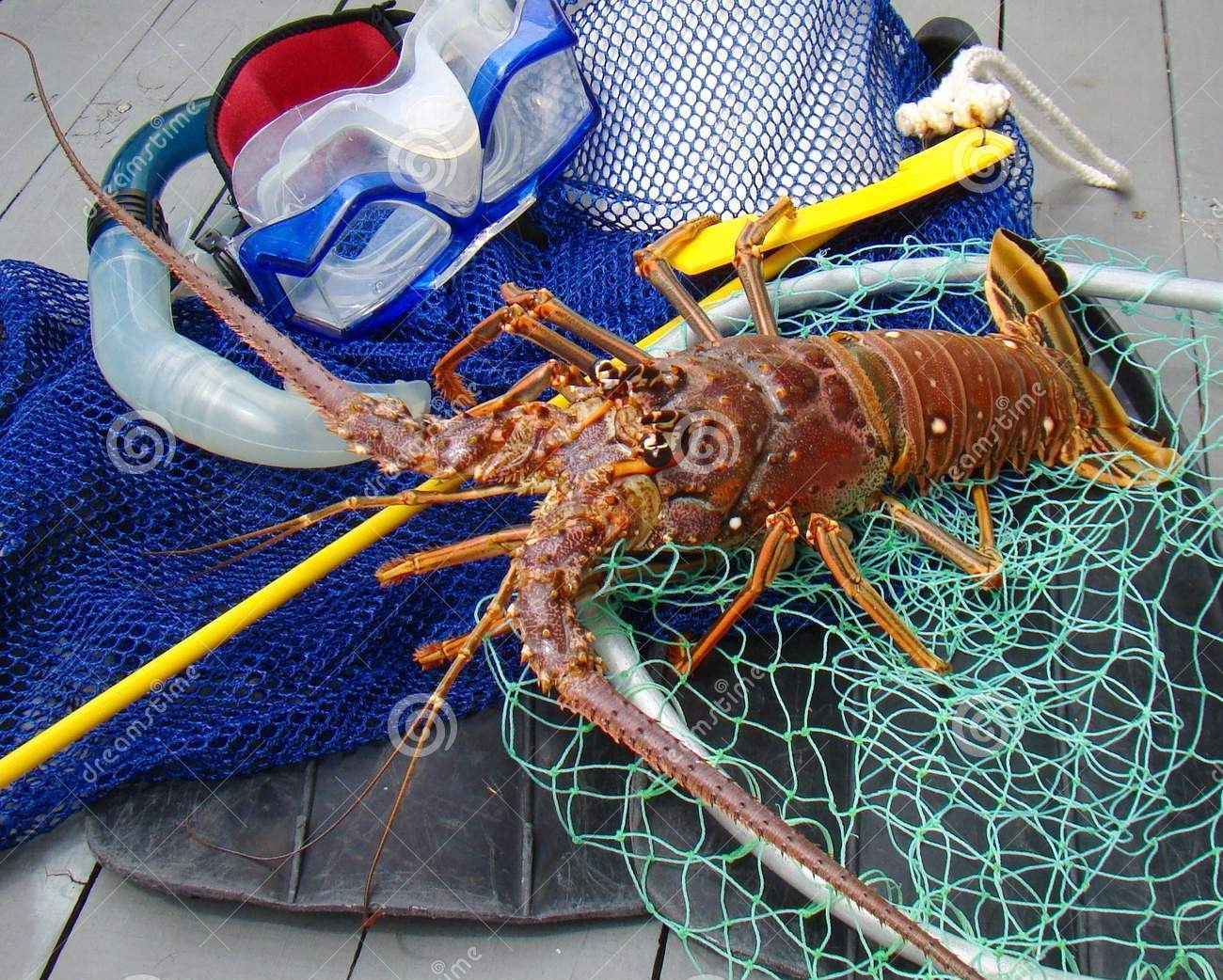 Florida Spiny Lobster Season and Dive Gear